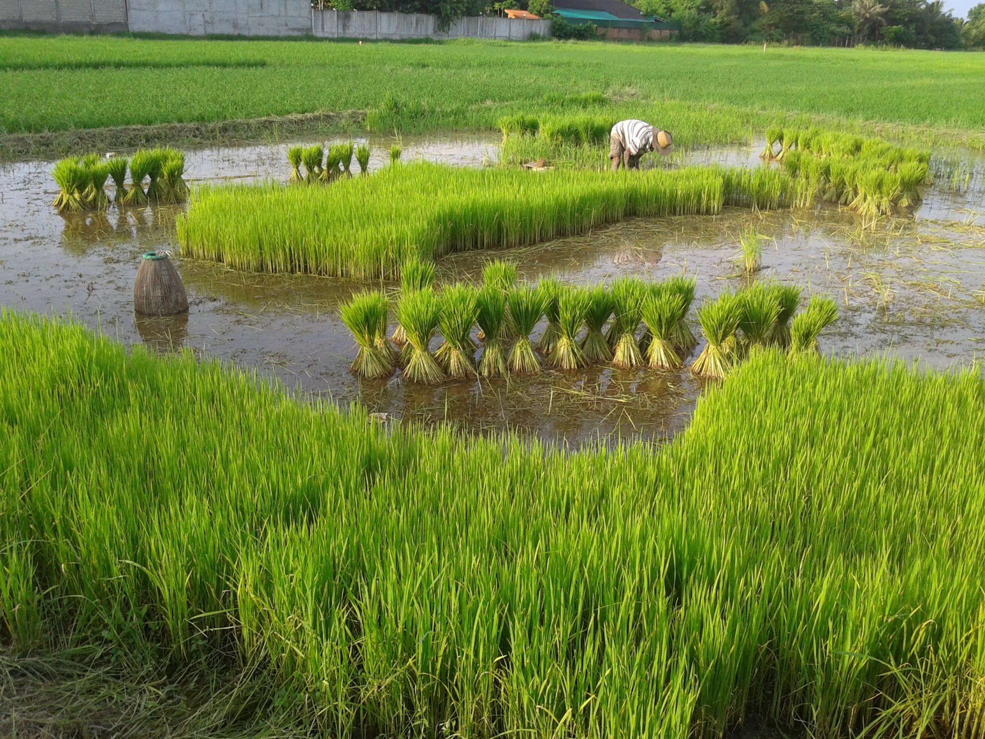 Addressing the wetland and agriculture conundrum | Water ...