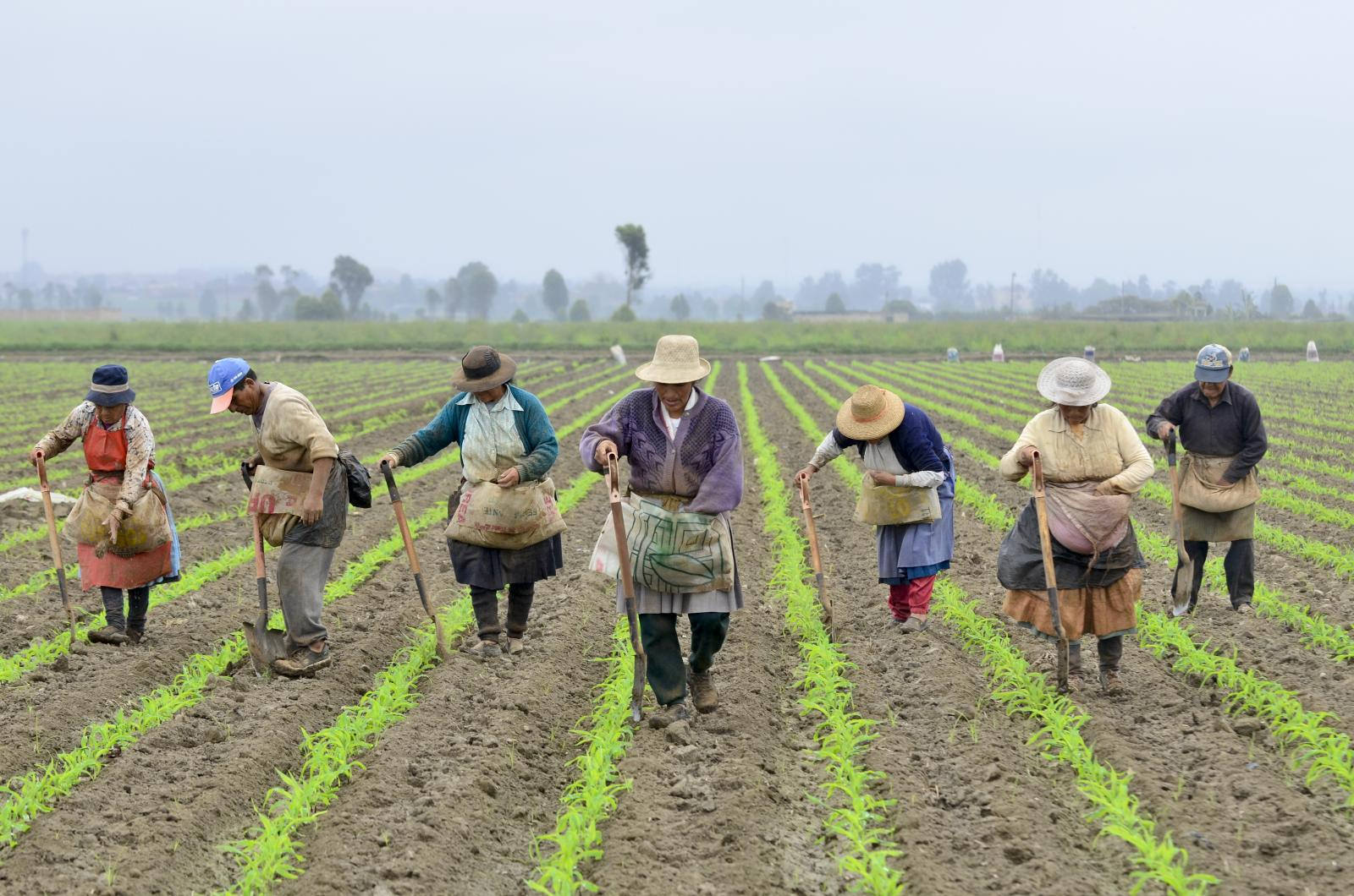Farmers in the Cañete River basin, Peru.