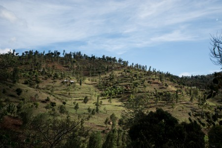 The terraced landscape at Lushoto is designed to prevent soil run-off and erosion.