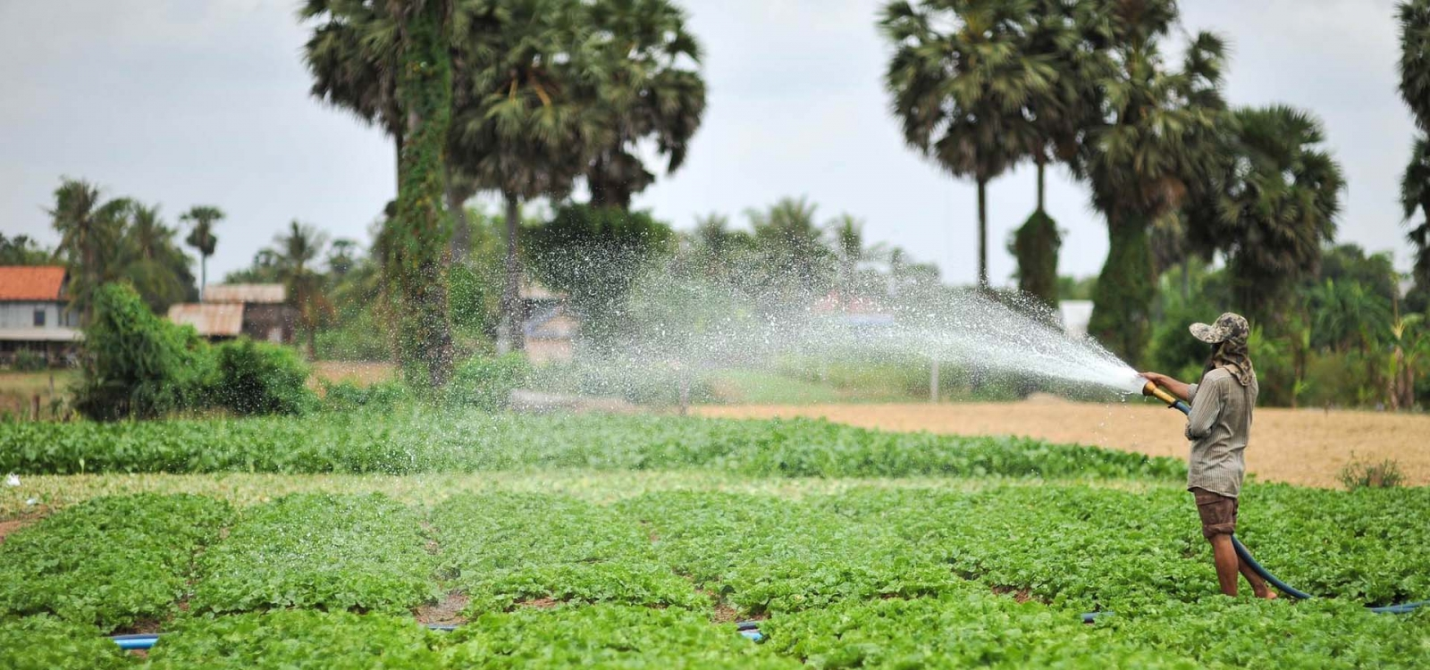 Image Result For Irrigation Solutions