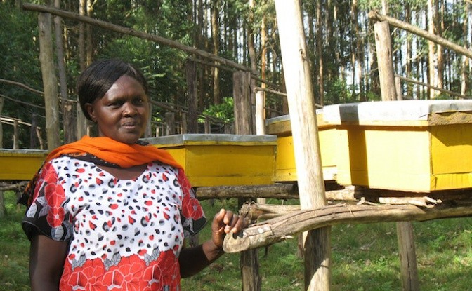 Sarah Karungari is a Kimunye Community Forestry Association member working on a beehive project. Photo: Fred Pearce