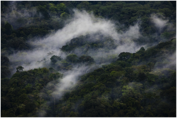 Clouds rise through Bwindi Impenetrable National Park, home to the endangered mountain gorilla. Photo by: Benjamin Drummond. Conservation International