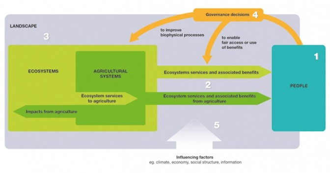Ecosystem Services and Resilience Framework