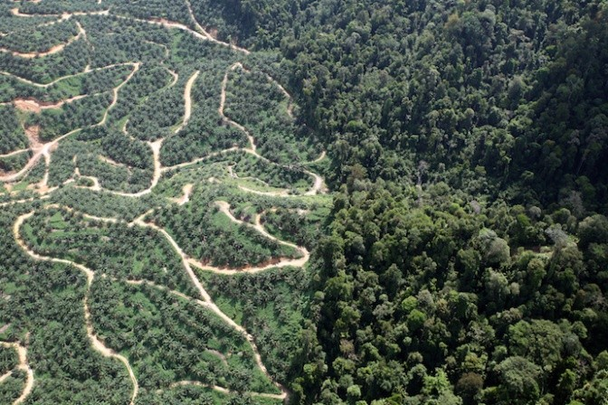 The siting tool is being used to guide land use planning in oil palm - forest landscapes