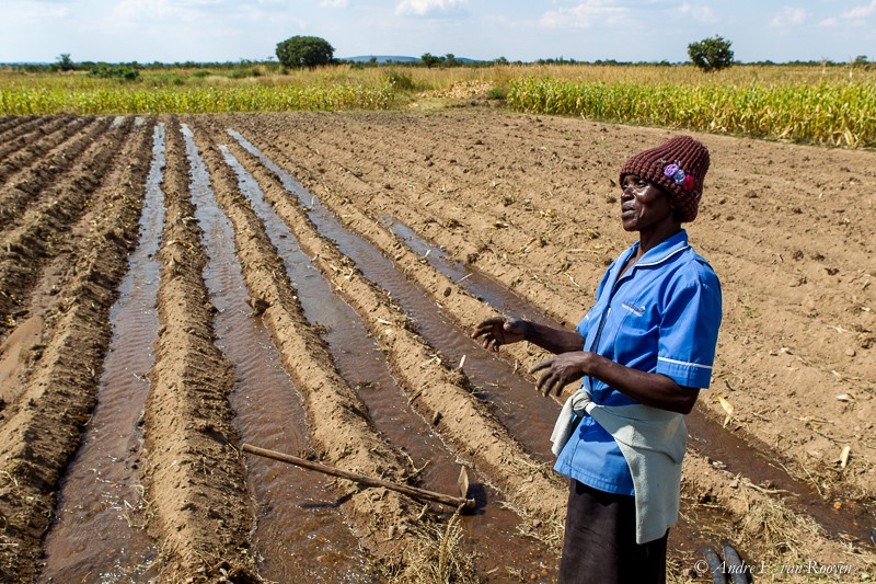 Irrigation in Zimbabwe.