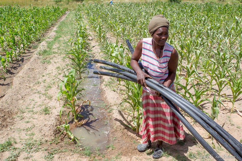 A farmer puts in place pipes at an irrigation scheme in Zimbabwe.