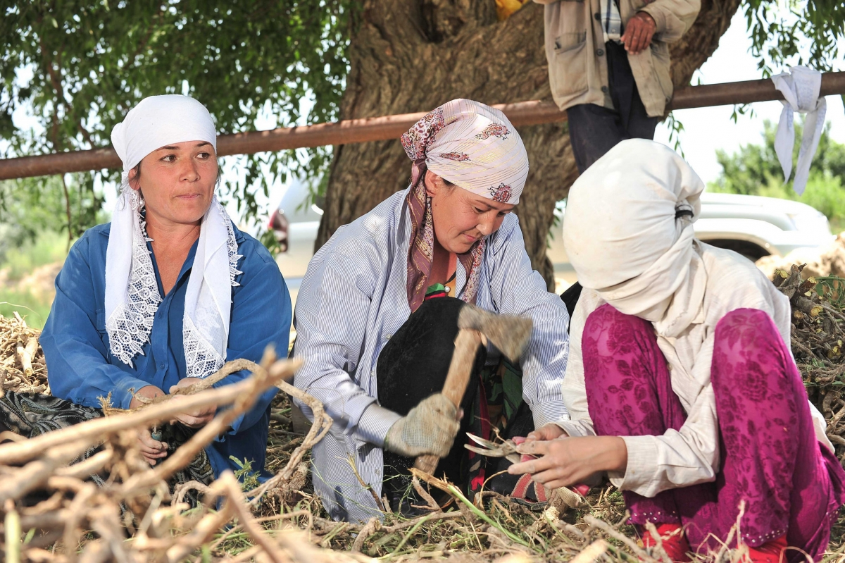 Many Central Asian women are forced to take on agricultural wage labor under informal and volatile agreements.