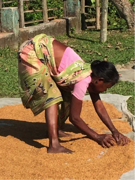 A landless woman is drying paddy.