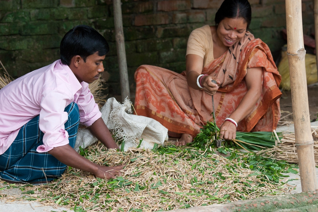 Most farm activities are about family survival. Here a Bangladeshi husband and wife work together cutting up feed for their livestock.