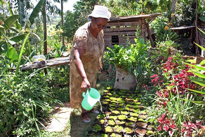 Jane Kabugi and her farm