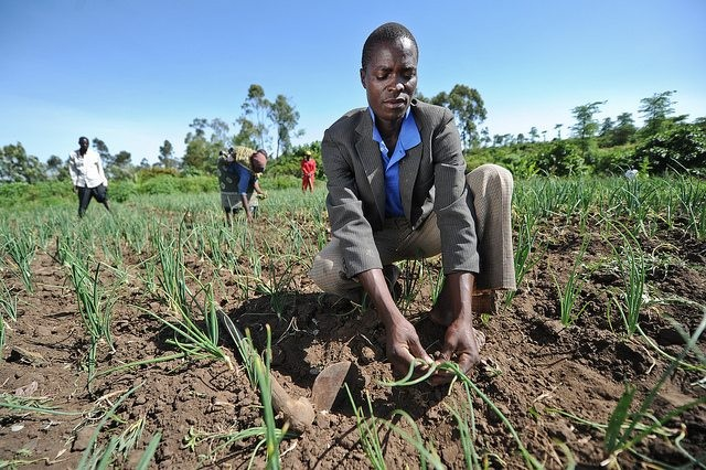 How can we make agriculture an attractive option for youth? Photo: CGIAR Climate on Flickr