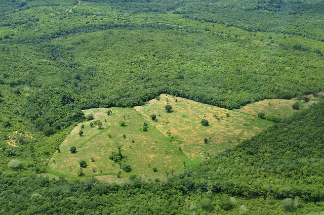 Carbon emissions from farming double when forests are cleared for farming. This is an aerial view of the Amazon Rainforest, near Manaus. Photo: Neil Palmer/CIAT