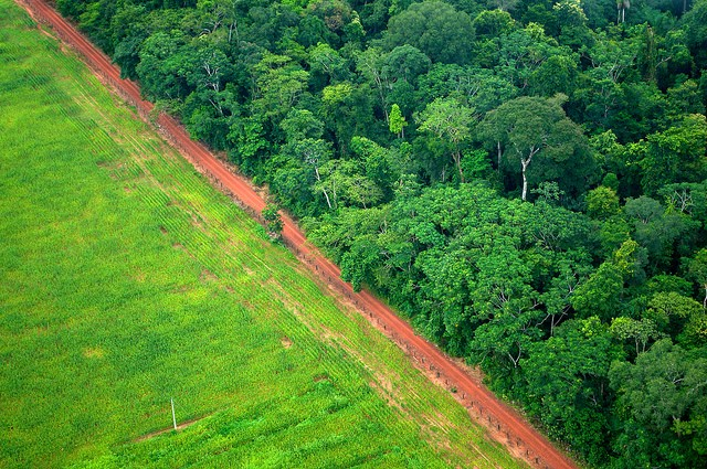 Between 1990 and 2010 Latin America has lost over 1 million of km2 of tropical forest, becoming the second largest deforestation hotspot in the world, only preceded by Southeast Asia.  Photo: CIFOR