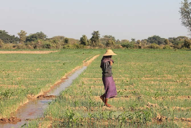 A small-holder irrigation scheme in the Dry Zone. Photo: Matthew McCartney/IWMI