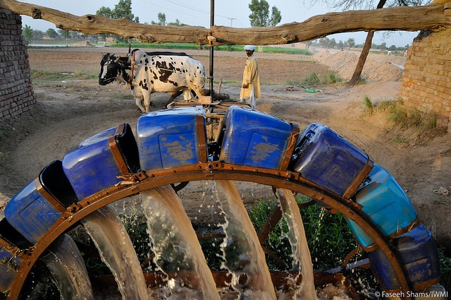 The buffalo and the water wheel: an irrigation system in Pakistan. Photo credit: Fasseh Shams/IWMI