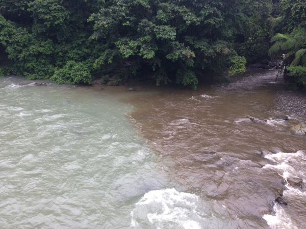 In the Anchicaya River Basin in western Colombia, the merging of two rivers reveals the difference in sedimentation between a river that is protected (left) and unprotected (right) upstream. (© CI/photo by Leonardo Saenz)