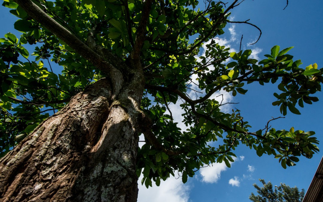 Trees on agricultural land could save four times more carbon.