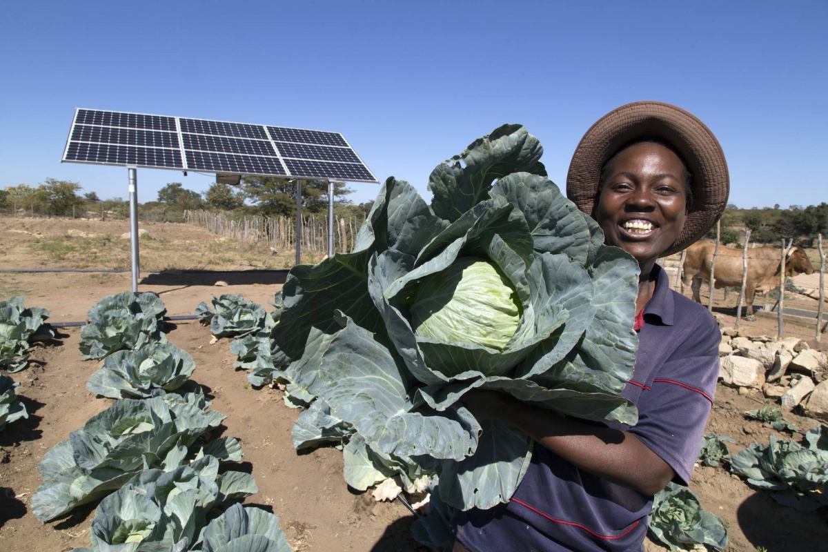 Woman with cabbages in Zimbabwe