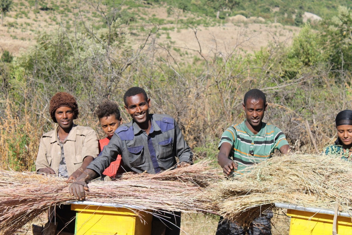 Landless youth practice beekeeping near an exclosure area in Gomit watershed.