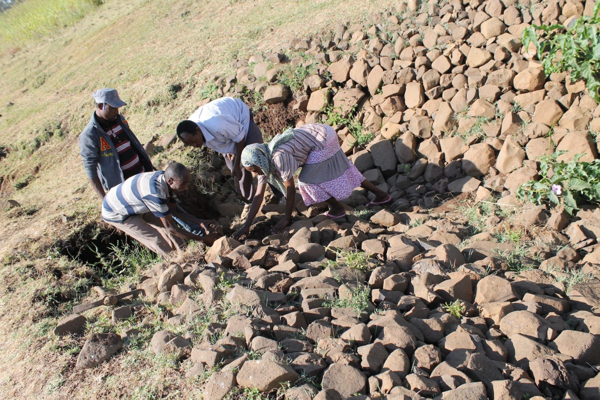 Farmers are treating a gully by filling the gully head with stones.