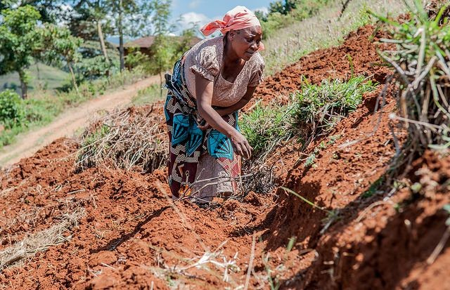 Communities dig terraces to stop soil erosion in Lushoto, Tanzania.