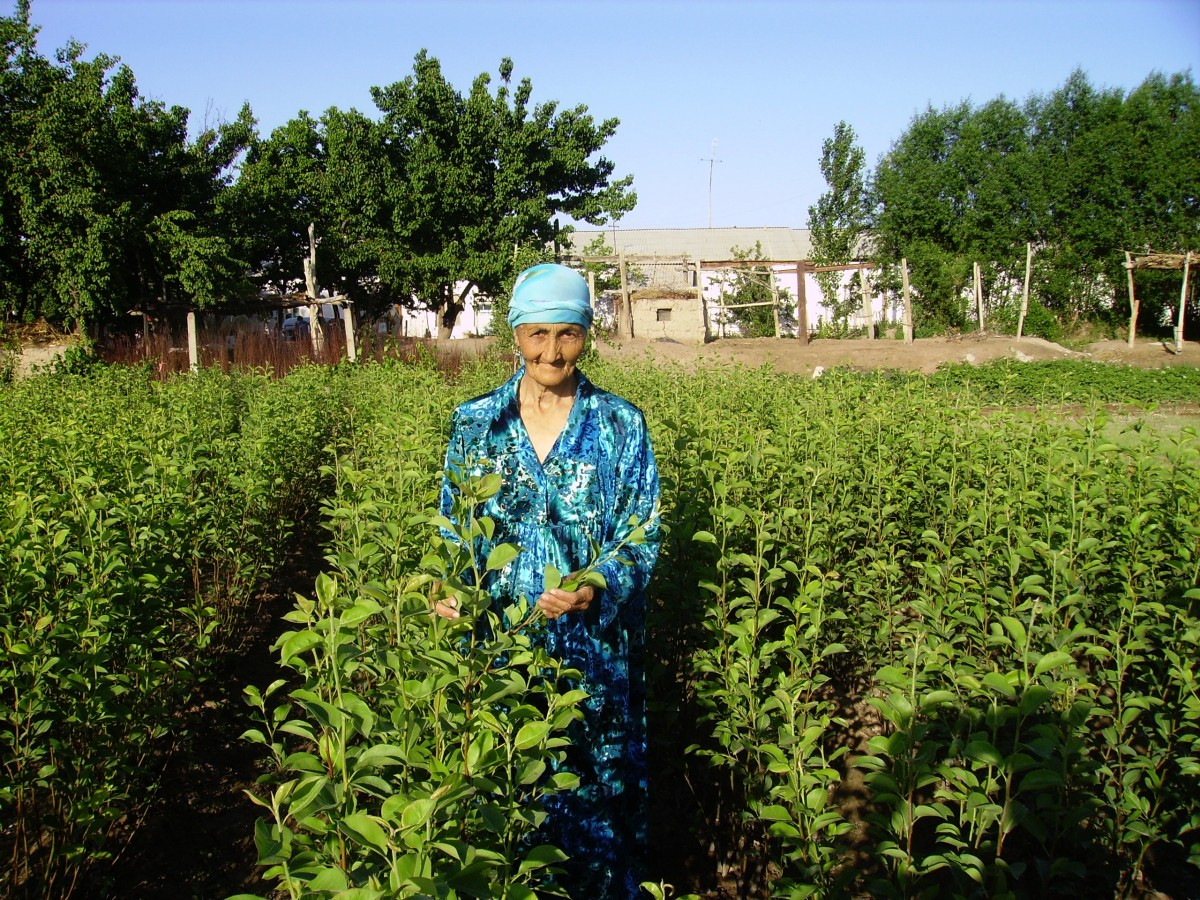 Mrs. Malika Karimova with her fruit trees in Uzbekistan.
