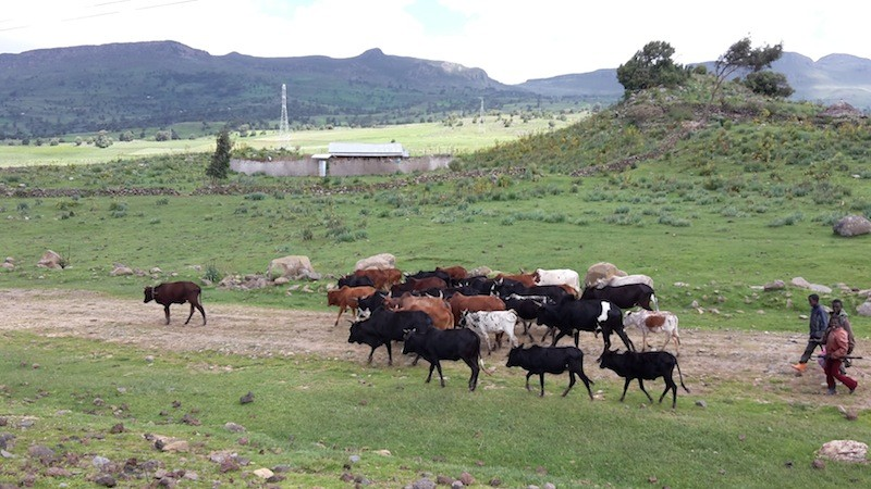 Upland herders SHARE Ethiopia Highlands