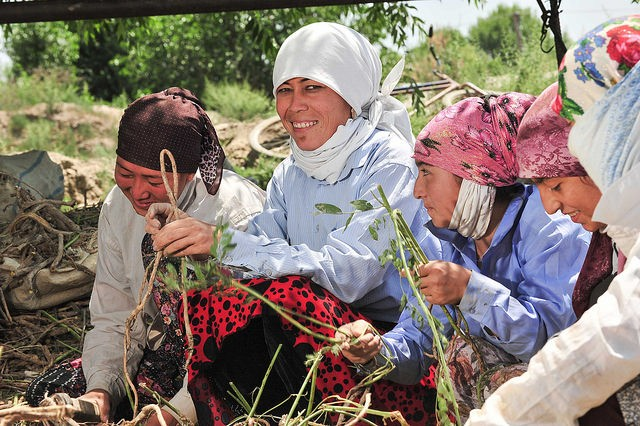 Women in the field in Central Asia.