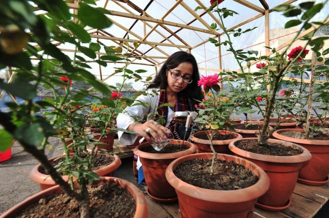 Fecal pellet trials on roses in Bangladesh.
