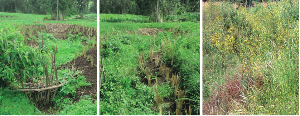 Methods for sustaining soil and water conservation measures in