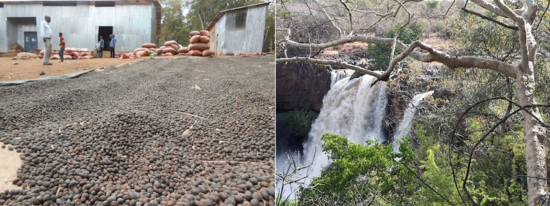 mid and low lands coffee waterfall ethiopia SHARE