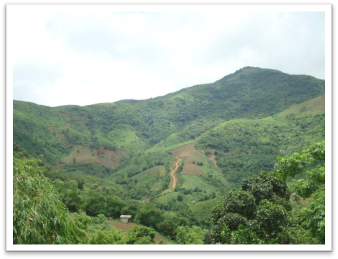 Natural forest regrowth in upland Vietnam.