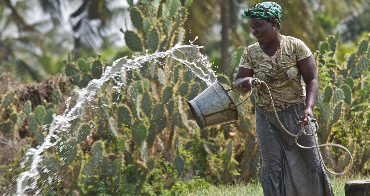 A woman watering crops in Ghana.