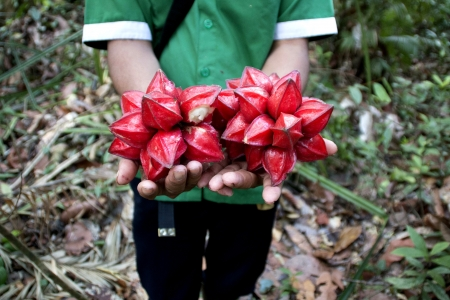 Fruit grown in a community forestry project in Sintang, Kalimantan, Indonesia.