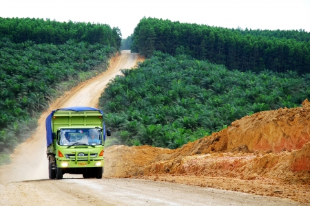 An oil palm plantation in Indonesia.
