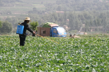 Farmer in China's Guizhou province spreading pesticide on her crops.