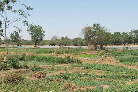Agriculture in Burkina Faso