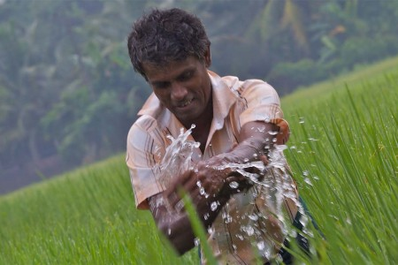 Farmer in the field in Gampaha, Western Province, Sri Lanka.