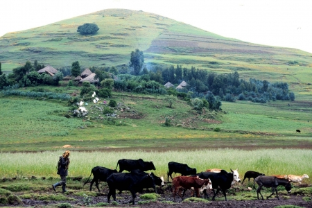 Farming in the highlands of Ethiopia.
