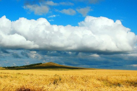 Grain fields in Kazakhstan.