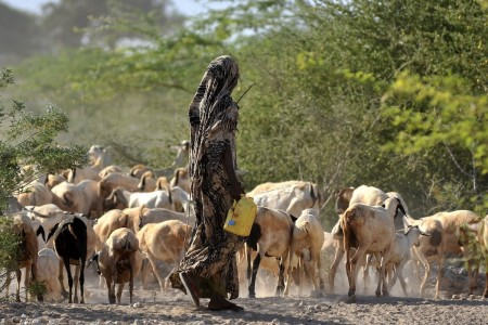 Goats at a water point near Wajir, Kenya