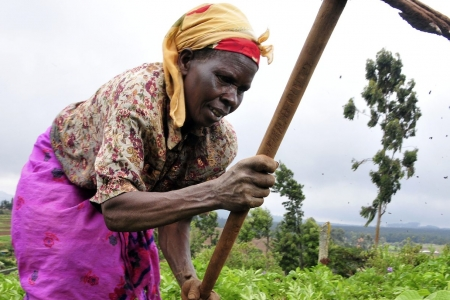 Farmer at work in the Mount Kenya region.