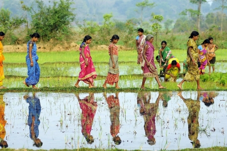 Women working in their rice paddy fields
