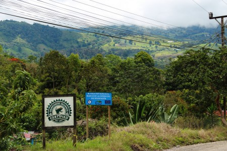 Rainforest alliance-certified coffee farms