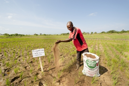 Farmer with a bag of fortifer in Kpong Irrigation Scheme, in Asutuare in Ghana