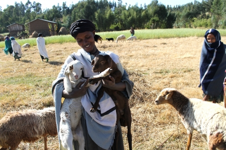 Woman farmer holds onto lambs in the Ethiopian Highlands.
