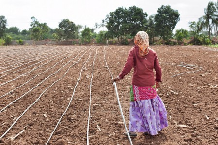 woman installing drip irrigation