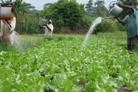 manual irrigation ghana