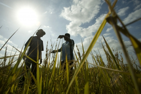 Farmer in Mozambique talks to agriculture supervisor