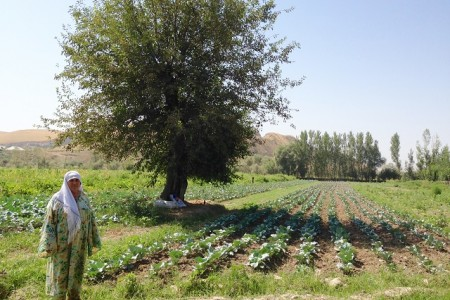 Tajik Woman field